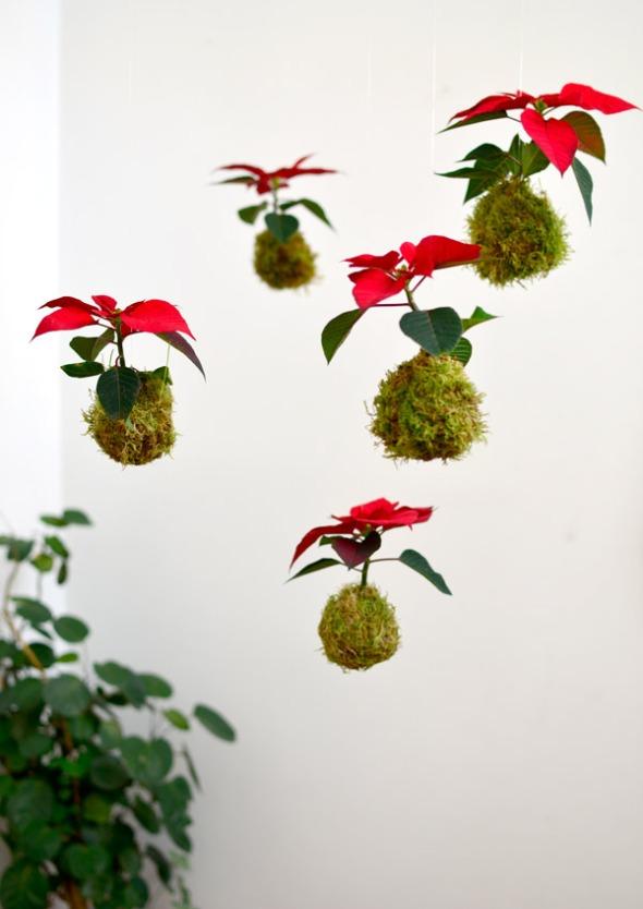Kokedama-Navidad_Flor-de-Pascua-4